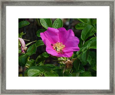 Going For The Gold Framed Print by Heather Coen