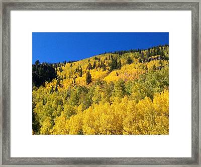 Framed Print featuring the photograph Going Gold by Fortunate Findings Shirley Dickerson