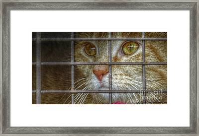 Going Home Framed Print by Mary  King
