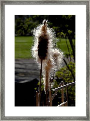 Going To Seed Framed Print by David Patterson