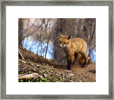 Going To The Den  Framed Print by Thomas Young