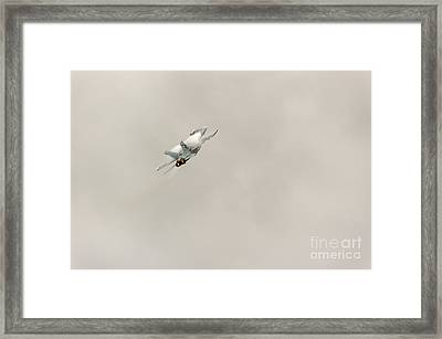 Going Vertical Framed Print