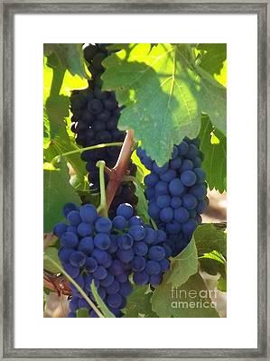 Golan Grapes Framed Print