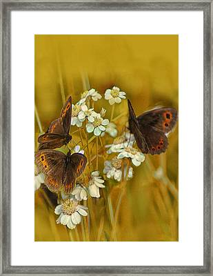 Gold And Brown Framed Print