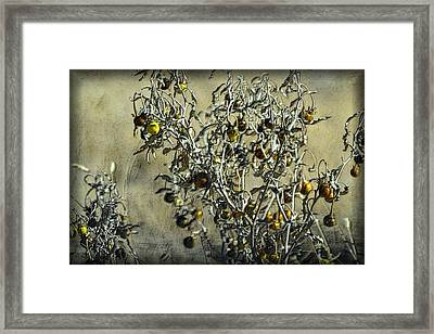 Framed Print featuring the photograph Gold And Gray - Silver Nightshade by Nadalyn Larsen
