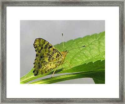 Gold And Green  Framed Print by Jennifer Wheatley Wolf