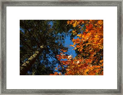 Gold And Green Framed Print
