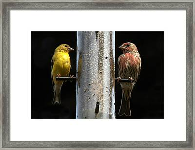 Framed Print featuring the photograph Gold And Purple Finch by Geraldine Alexander