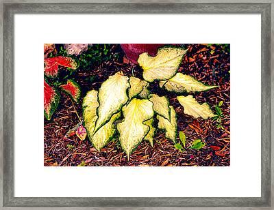 Gold Bi Color Leaves Framed Print