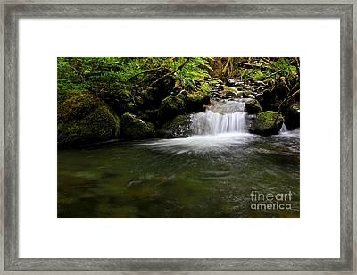 Gold Creek  Framed Print by Tim Rice
