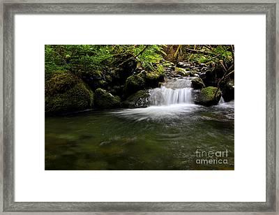 Gold Creek  Framed Print by Tim Rice