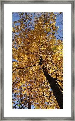 Gold Framed Print by Doug Hubbard