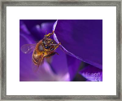 Gold Dust Framed Print by Sharon Talson