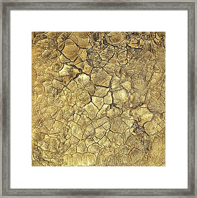 Gold Fever 1 Framed Print by Alan Casadei