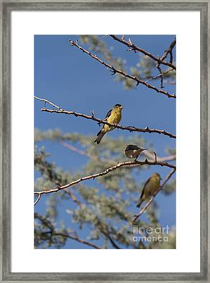 Gold Finches I Have Your Back Framed Print
