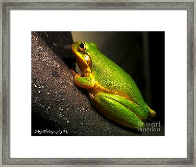 Framed Print featuring the photograph Gold Flake Frog by Marty Gayler