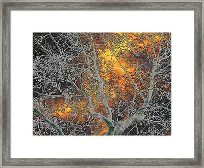 Gold In The Midst Of Winter Framed Print