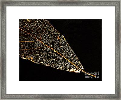 Framed Print featuring the photograph Gold Leaf by Ann Horn