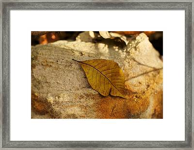 Framed Print featuring the photograph Gold Leaf by Jane Eleanor Nicholas