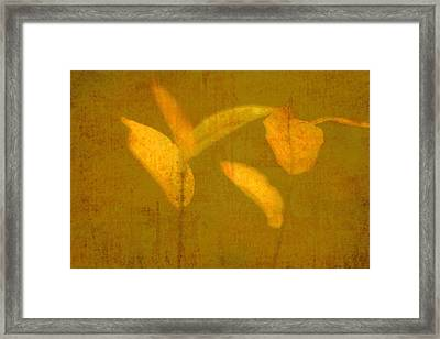 Gold Leaves Framed Print by Suzanne Powers