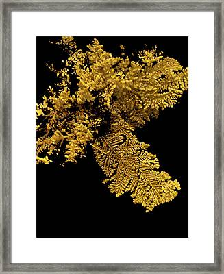 Gold Framed Print by Natural History Museum, London