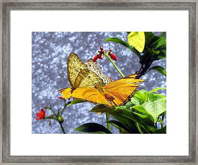 Gold On Gold Framed Print by Jennifer Wheatley Wolf