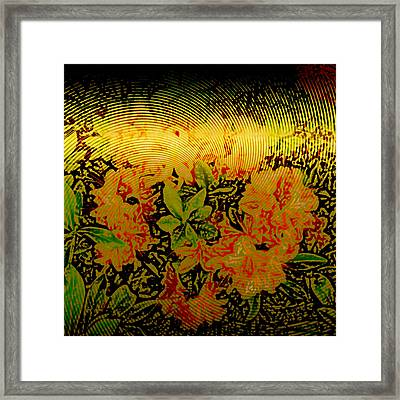 Gold Sheet Floral 1 Framed Print by Patricia Keith