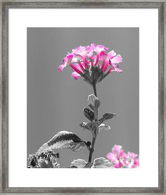 Golda Framed Print