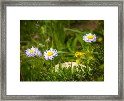 Golden Afternoon Framed Print by Mark Andrew Thomas