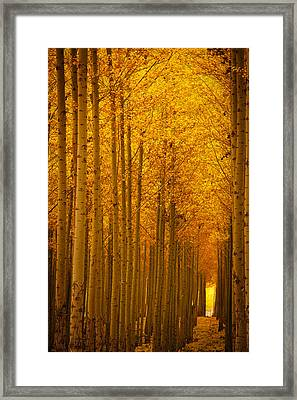 Golden Alley Framed Print by Dan Mihai
