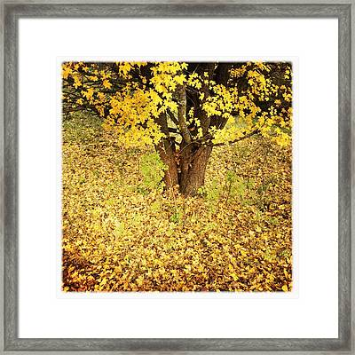 Golden And Yellow Autumn Leaves Framed Print