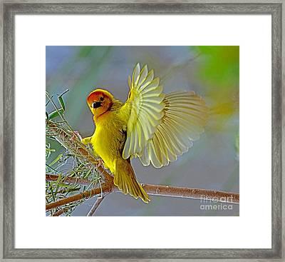 Golden Angel Framed Print by Rodney Campbell