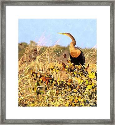 Golden Anhinga Framed Print