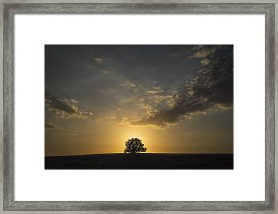 Framed Print featuring the photograph Golden by Antonio Jorge Nunes