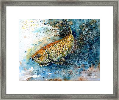 Golden Arowana Framed Print by Zaira Dzhaubaeva