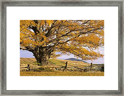 Golden Autumn Framed Print by Alan L Graham