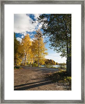 Golden Autumn Birches Framed Print