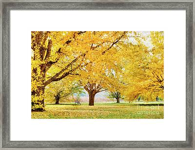 Golden Autumn Framed Print by Darren Fisher