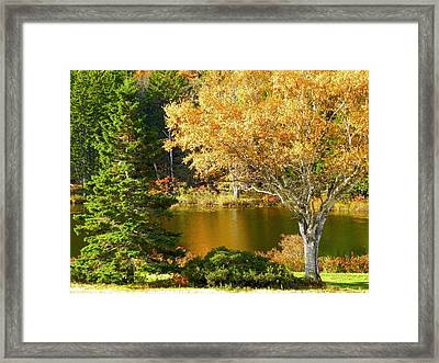 Framed Print featuring the photograph Golden Autumn by Gene Cyr