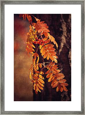 Golden Autumn Leaves  Framed Print by Maria Angelica Maira