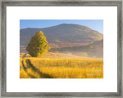 Golden Autumn Morning Framed Print