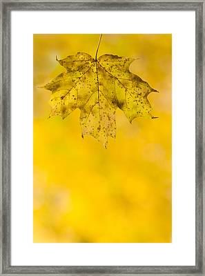 Golden Autumn Framed Print by Sebastian Musial