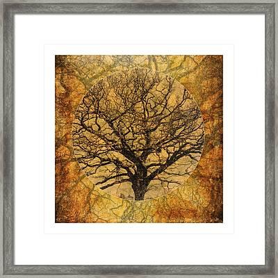 Golden Autumnal Trees Framed Print