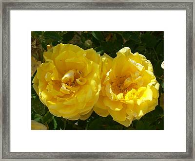 Framed Print featuring the photograph Golden Beauty by Jewel Hengen