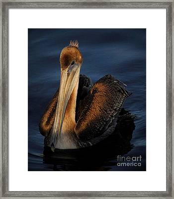 Golden Beauty Framed Print