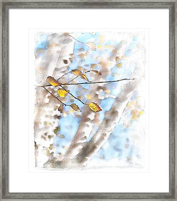 Golden Birch Framed Print by Caitlyn  Grasso