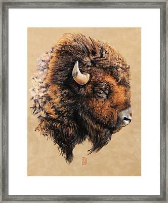 Golden Bison Framed Print by Debra Jones