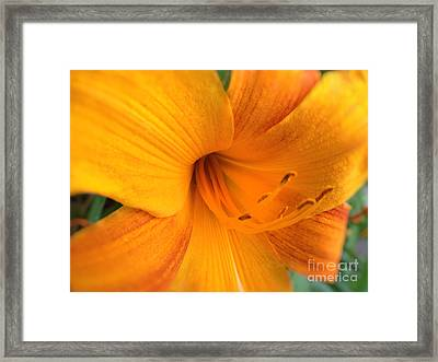 Golden Blossom Framed Print