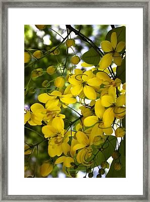 Golden Bow Framed Print by Chrystyne Novack