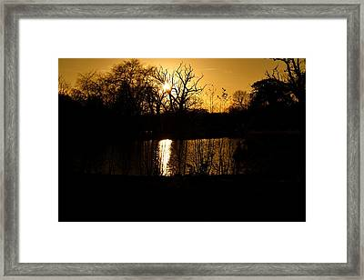 Golden Brown Framed Print by Dave Woodbridge